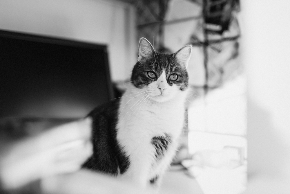 Katze schwarz-weiß, Kater